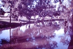1960 March - Myall Creek